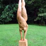 acrobat red oak